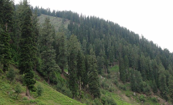 Pakistan is to create a Forestry Board in which all of its four provinces will be given representation on matters relating to its natural habitats and wetlands as one of the country's chief ministers outlined plans to make investment in and sustainable management of the country's forests a leading priority.