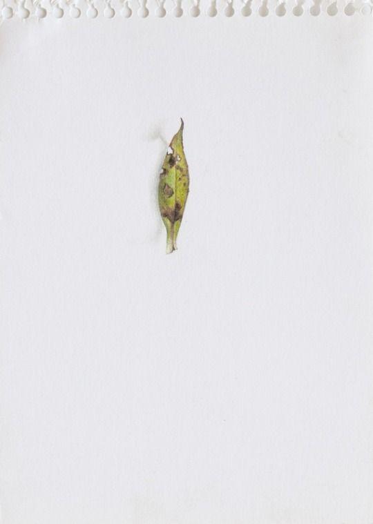 Contemporary Art Daily : Candy Jernigan at Wattis