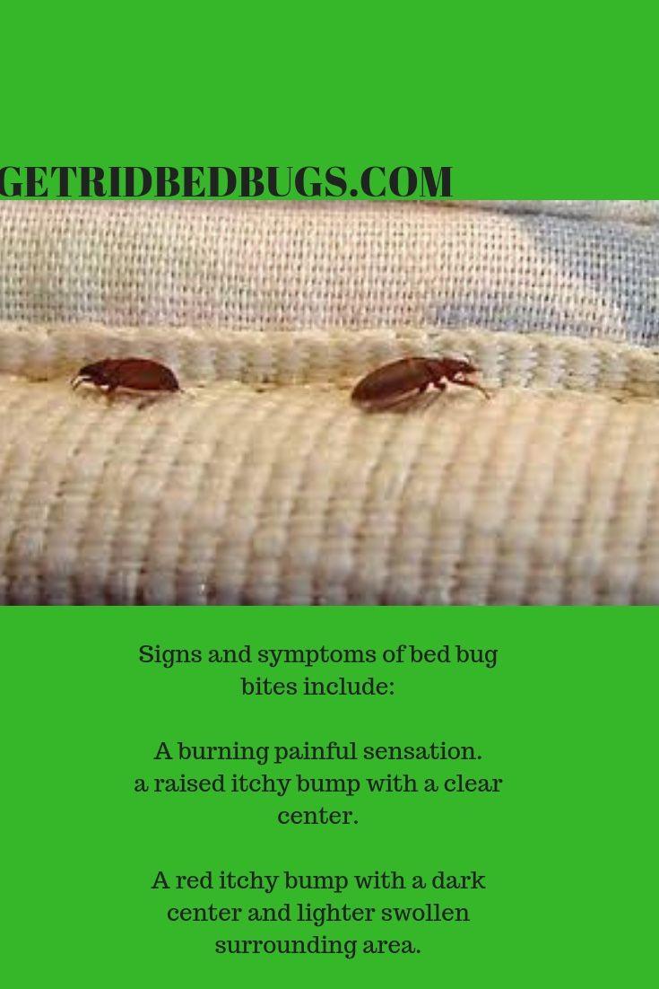 Getridbedbugs Killbedbugs Bedbugpictures With Images Bed Bug