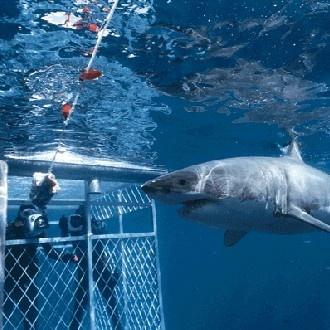Shark cage off Fremantle.