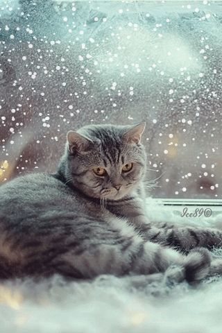 cat with snow gif