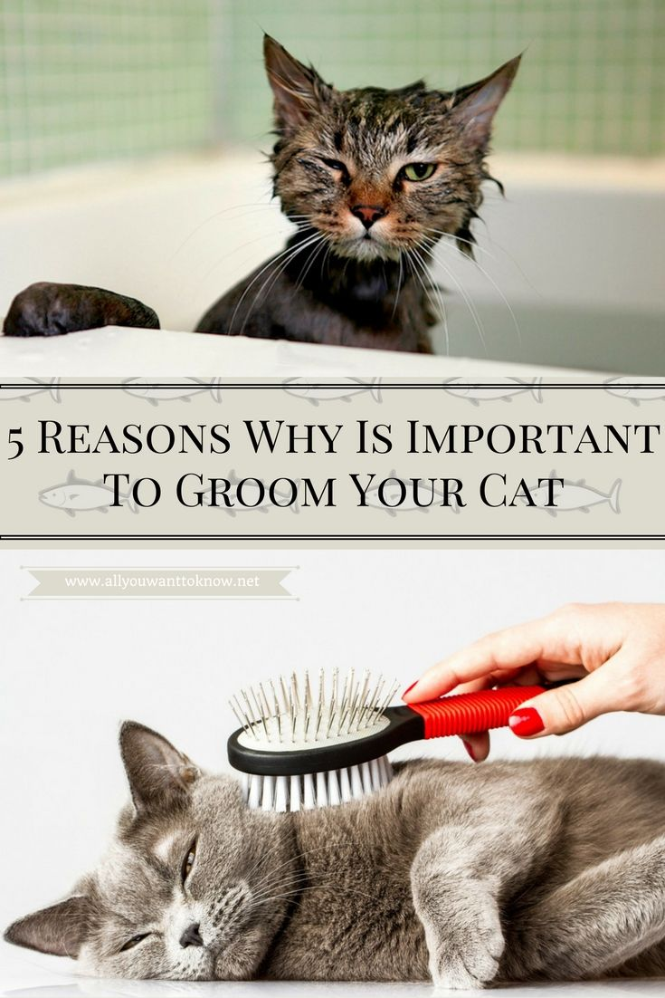 Even though many cat owners may not have thought about it in that way, cat grooming is really important. #cat #cats #groom #grooming