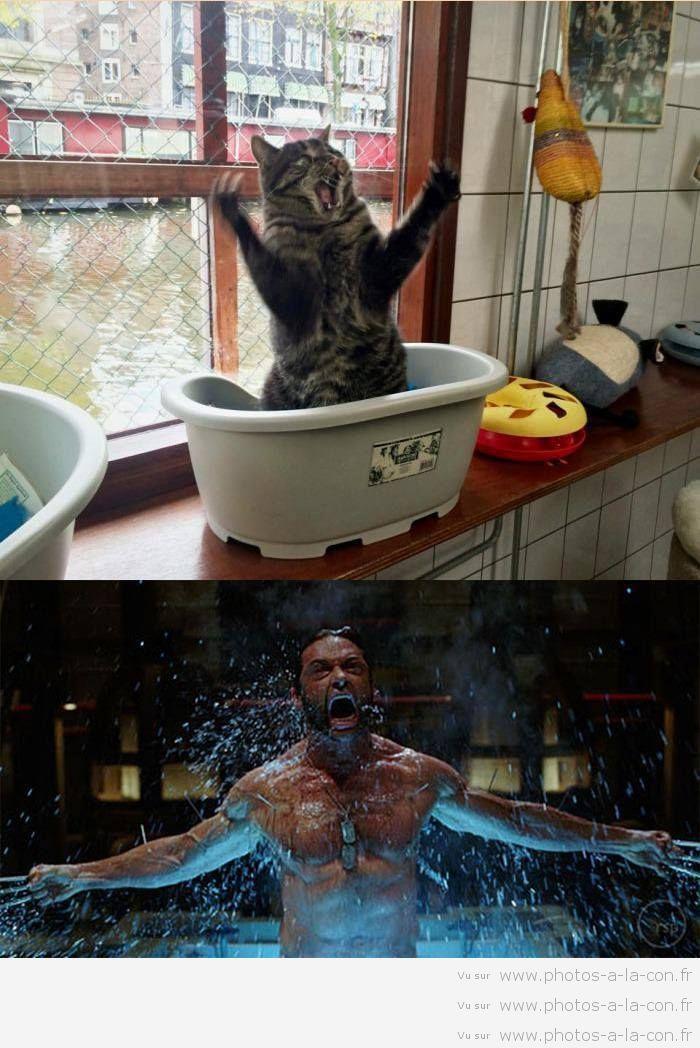 Quand un chat a trop vu les X-men... ça donne ça..