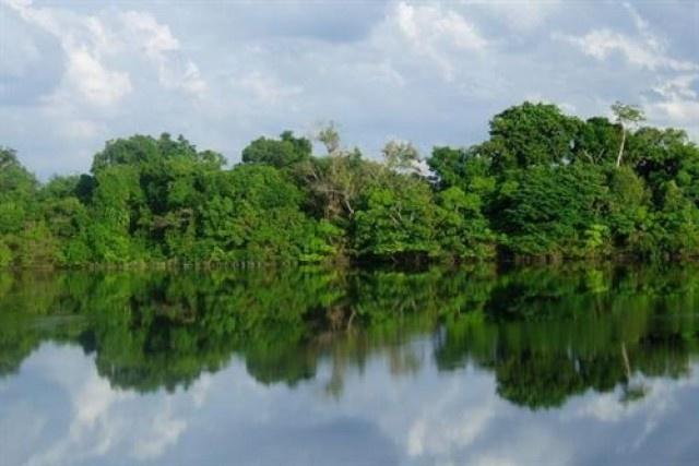 Las precipitaciones se reducen por la pérdida de los bosques tropicales   El Blincacequias