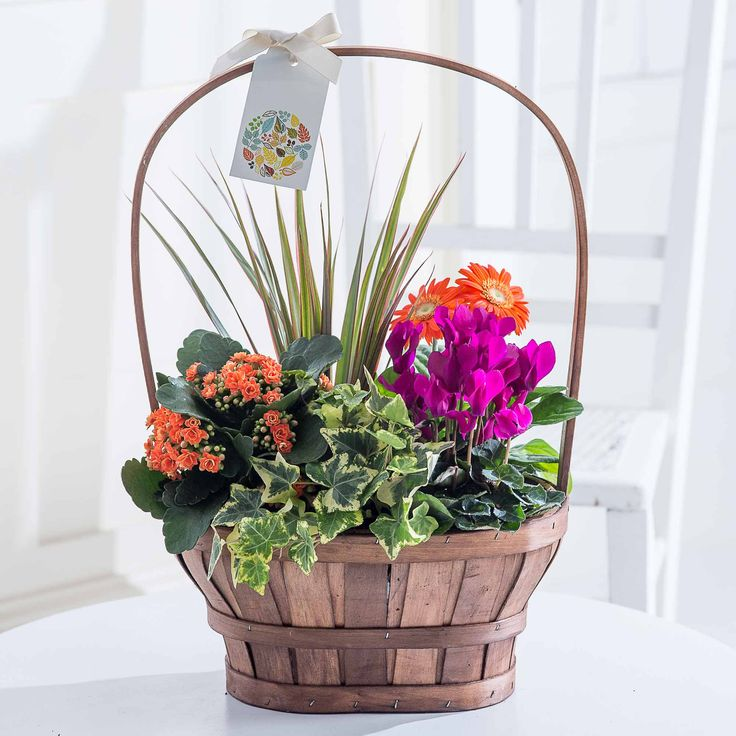 Large Autumn Mix Gift Basket: Brighten up the home of a loved one with this beautiful large gift basket. A medley of seasonal plants perfectly presented in a striking gift basket and finished with a charming gift tag and ivory ribbon