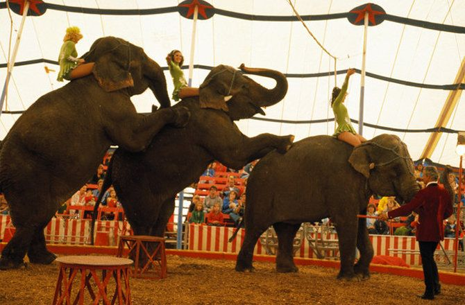 America's best-known circus will relocate all of its elephants by May, advancing the retirement date for the giant pachyderms by more than a year.