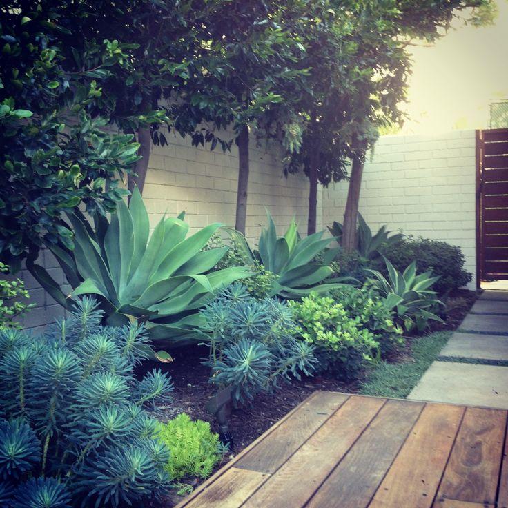 pour couloir face a la porte d'entree. Succulents and structural plants, hardscapes, hardscaping, landscape design
