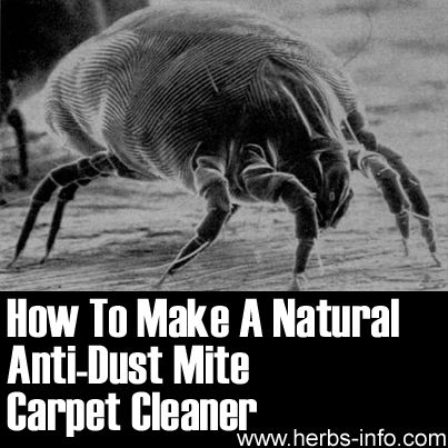 19 Best Images About Curing A Dust Mite Allergy On