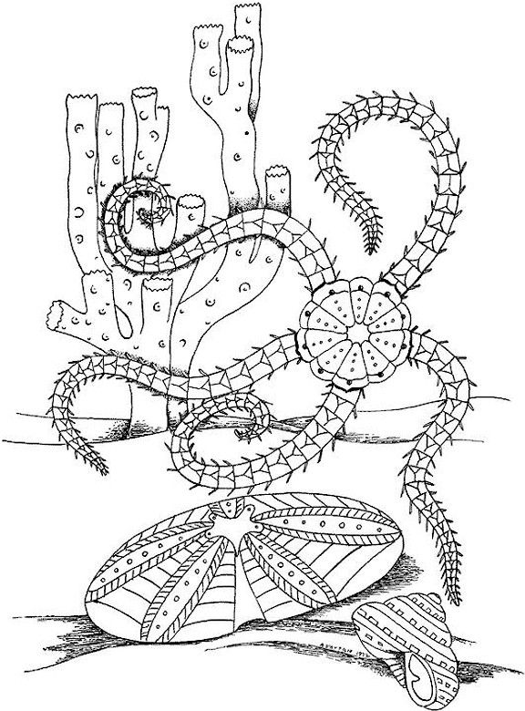 75 best Free Colouring Pages - Sea Theme images on Pinterest - fresh abstract ocean coloring pages