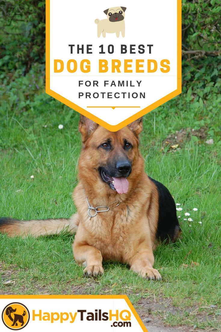 Account Suspended Best Guard Dog Breeds Guard Dog Breeds Guard Dogs