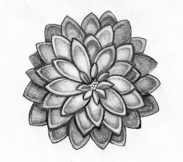 Art Pencil Drawings Of Flowers