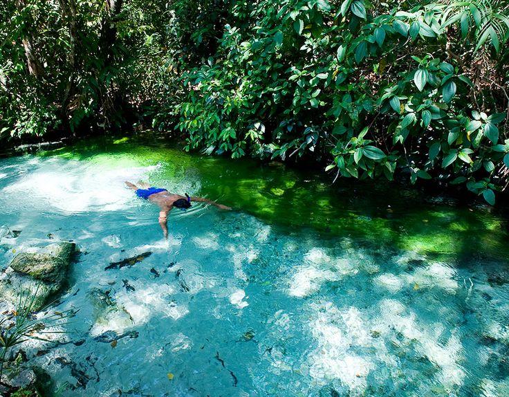 Norte Fervedouro, Tocantins Em meio à vegetação fechada do parque do Jalapão, um…