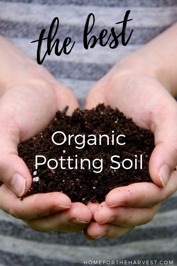 Promix Soil The Best Potting Soil For Organic Gardeners Organic