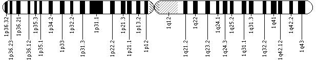 1q21.1 microdeletion is a chromosomal change in which a small piece of the long (q) arm of chromosome 1 is deleted in each cell. Specifically, affected individuals are missing about 1.35 million DNA building blocks (base pairs), also written as 1.35 megabases (Mb), in the q21.1 region. The exact size of the deleted region varies, but it typically contains at least nine genes. The loss of several of these genes probably contributes to the various signs and symptoms that can b