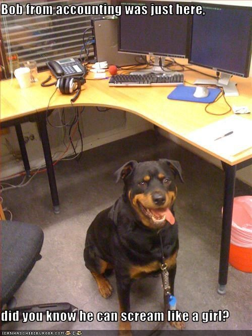 """16 Pups Ready for """"Take Your Dog to Work Day"""""""