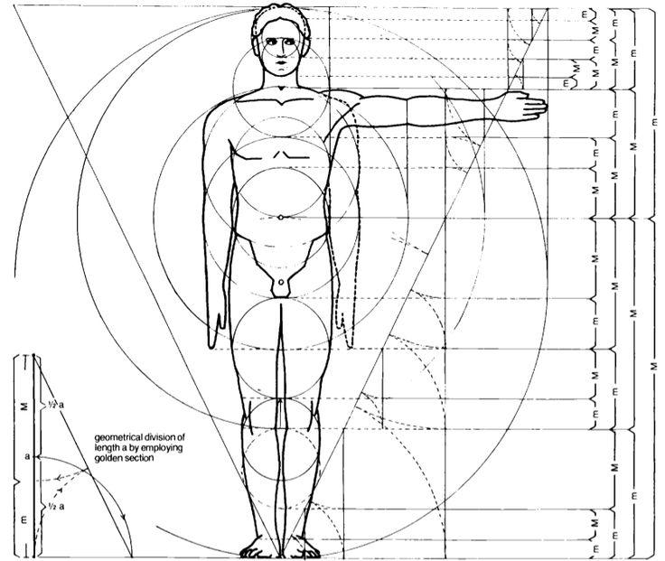 Phi in the human body    Le Corbusier (1887-1965). In his manifesto Vers une architecture, he presents the Golden Ratio as a natural rhythm, inborn to every human organism. For details on the historical origin and developement of Modulor I and II systems you can examine the excellent summary by architect Manel Franco [3]. Figure 3 shows the essential proportions proposed by Le Corbusier for the human body