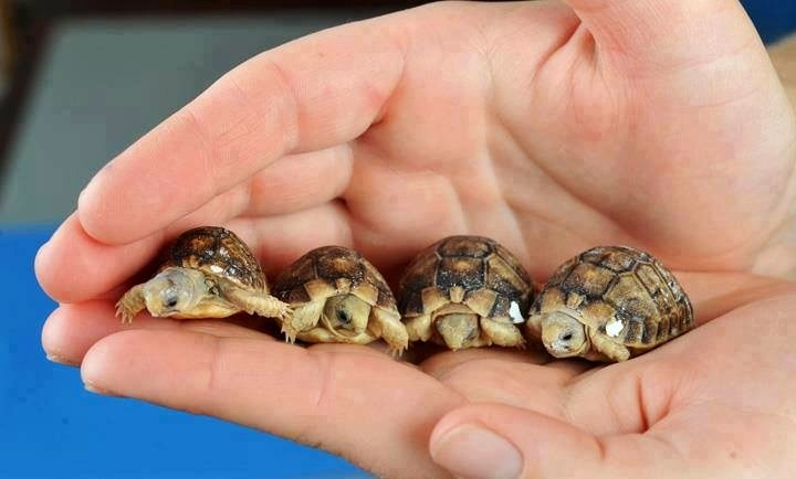 God's Tiniest Turtles!