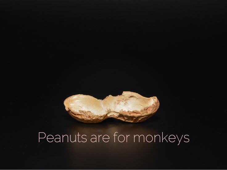 Peanuts are for monkeys. Don't be a monkey. WellpaidFreelancer.com