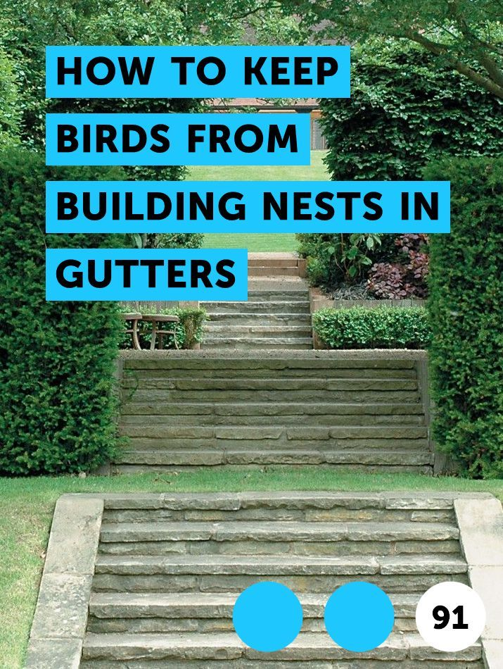 Learn How To Keep Birds From Building Nests In Gutters How To Guides Tips And Tricks Kill Tree Roots Garden Pests Tree Roots