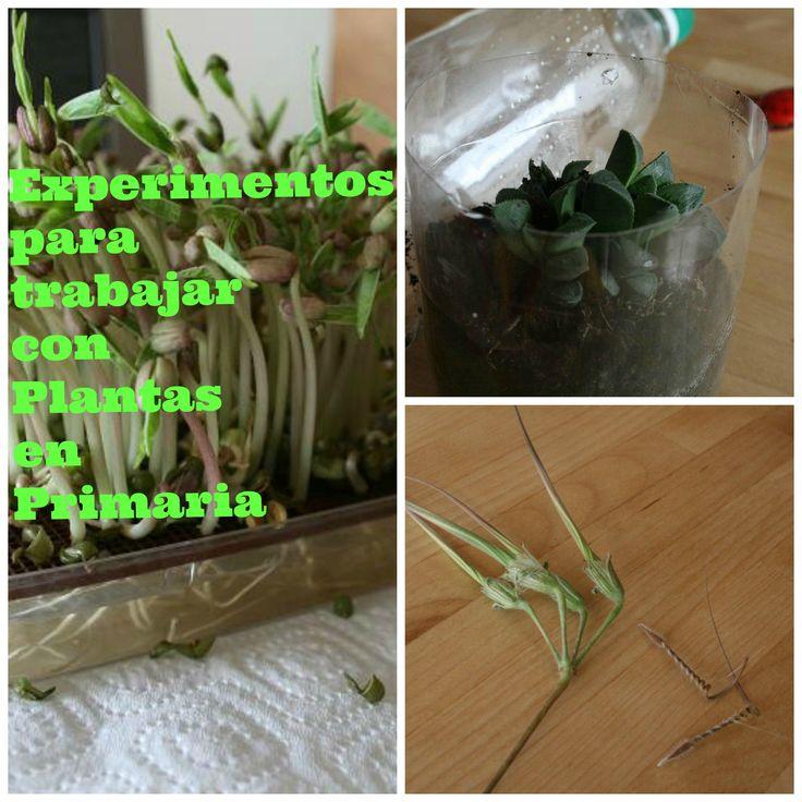 Actividades para trabajar con Plantas en las aulas de Primaria. Experimentos con Plantas.