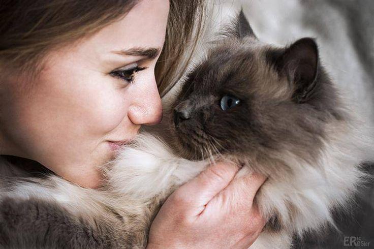 Des scientifiques ont découvert que les chats ont développé un système de communication élaboré : Voici comment dialoguer avec son chat