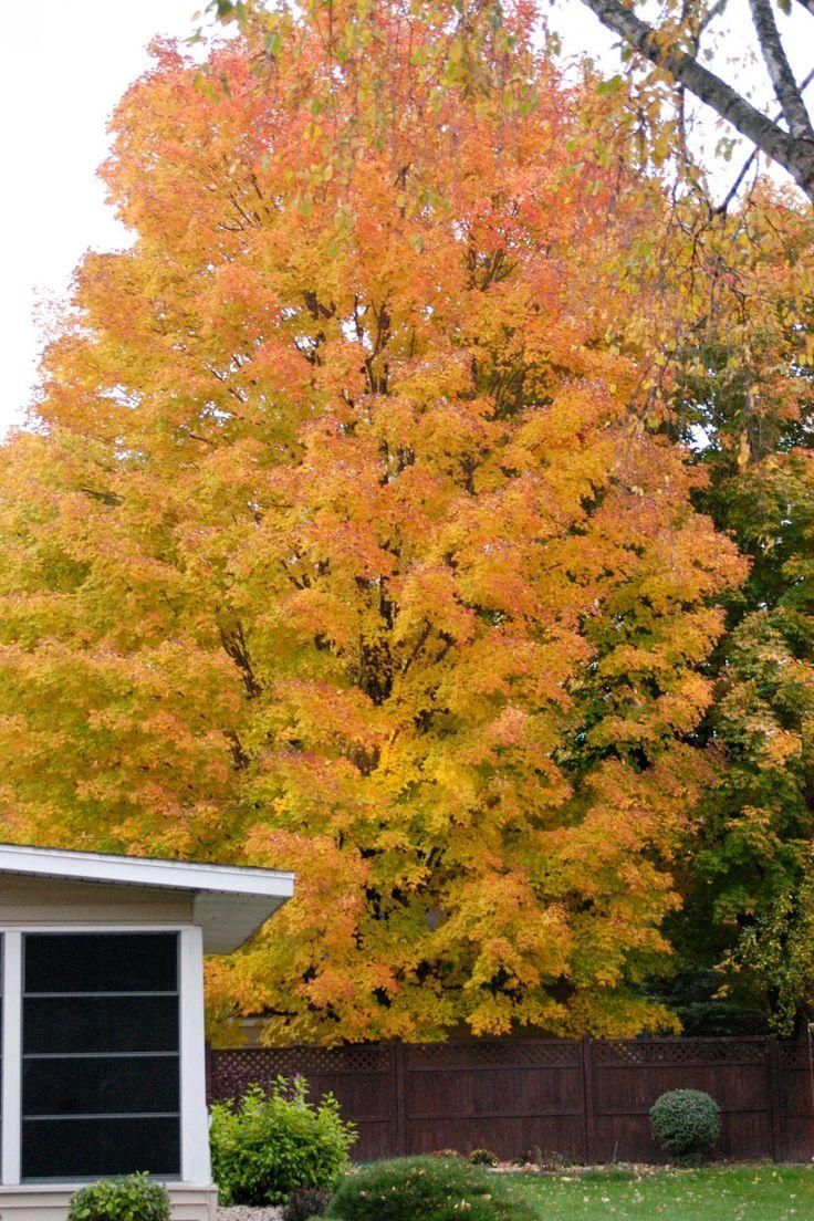 Tree borers amp bark beetles arborx tree health care - Plant The Perfect Tree For Arbor Day