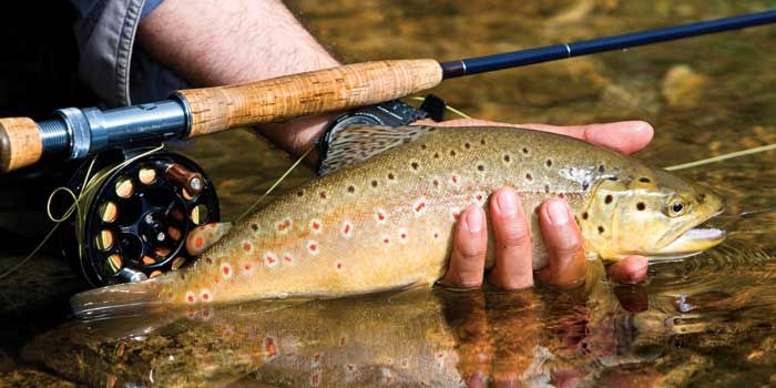 11 best fly fishing wnc images on pinterest fishing fly for Best trout fishing in nc