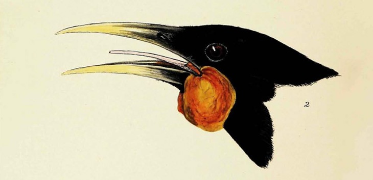 The huia - one of the birds you can read about in New Zealand's extinct birds, NZ Stack 598.042 GIL
