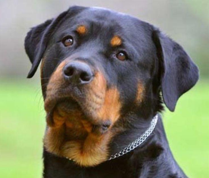 """""""Chi non ha mai posseduto un cane, non può sapere che cosa significhi essere amato"""" scriveva Arthur Schopenhauer, filosofo tedesco. Ed ancora oggi questa c"""