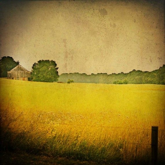 Fields of Gold by Bucks County on Etsy: Decor Golden, Shabby Chic Decor, Fine Art, Art Shabby, Landscape Photography, Decor Natural, Natural Photo, Golden Grains, Carl Christensen