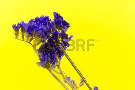 plant flower bloom blossom flora dry flowers purple yellow background Stock Photo