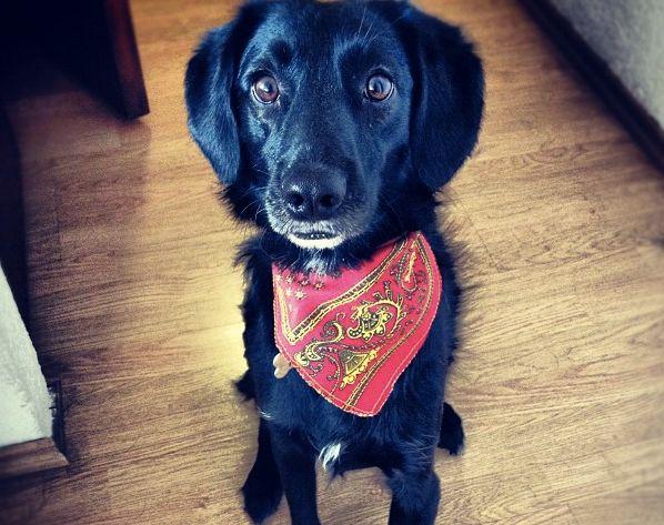 ¿Los perros negros son discriminados? - Instituto Perro