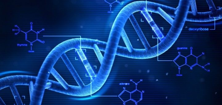 """There's a lot of talk about """"DNA activation"""", which is usually dismissed as new age mumbo-jumbo with no real scientific basis.  But a new study by researchers in Wisconsin, Spain, and France reports the first evidence of specific molecular changes in the body following a period of mindfulness meditation.  It shows that you can actually switch on certain genes while meditating."""
