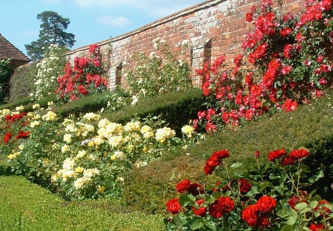 The stakes - a 200 year old walled rose garden standing between Nate and his billionaire status.  http://www2.warwick.ac.uk/fac/sci/moac/currentstudents/peter_cock/photos/packwood_house/rose_wall.jpg