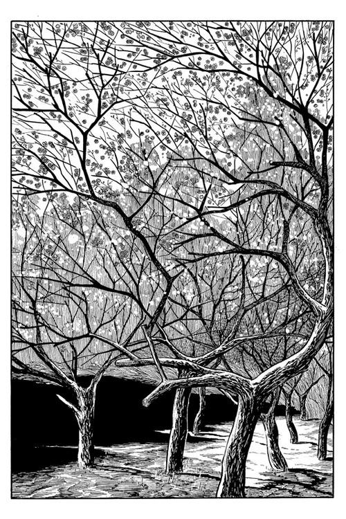 Cherry blossoms in bloom…  From Osamu Tezuka's masterpiece, Phoenix (1967-88).