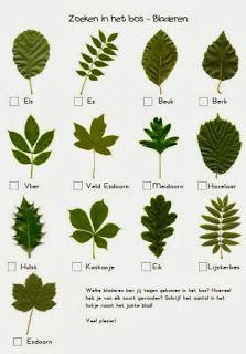 werkblad bladeren herkennen en andere leuke zoekopdrachten
