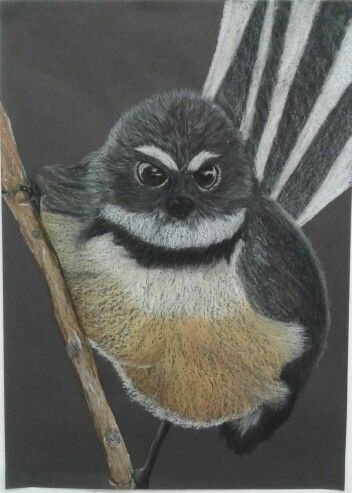 New Zealand Fantail- Oil Pastel