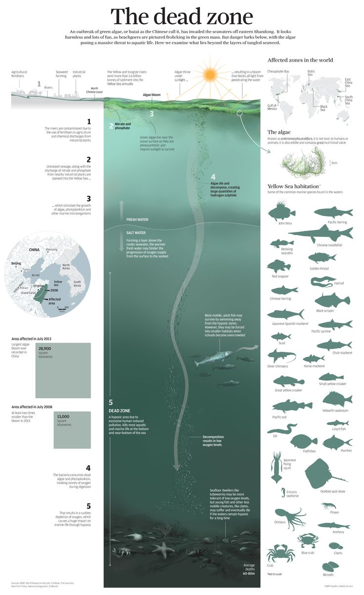 Dead zones at sea. Infographic for South China Morning Post. Adolfo Arranz