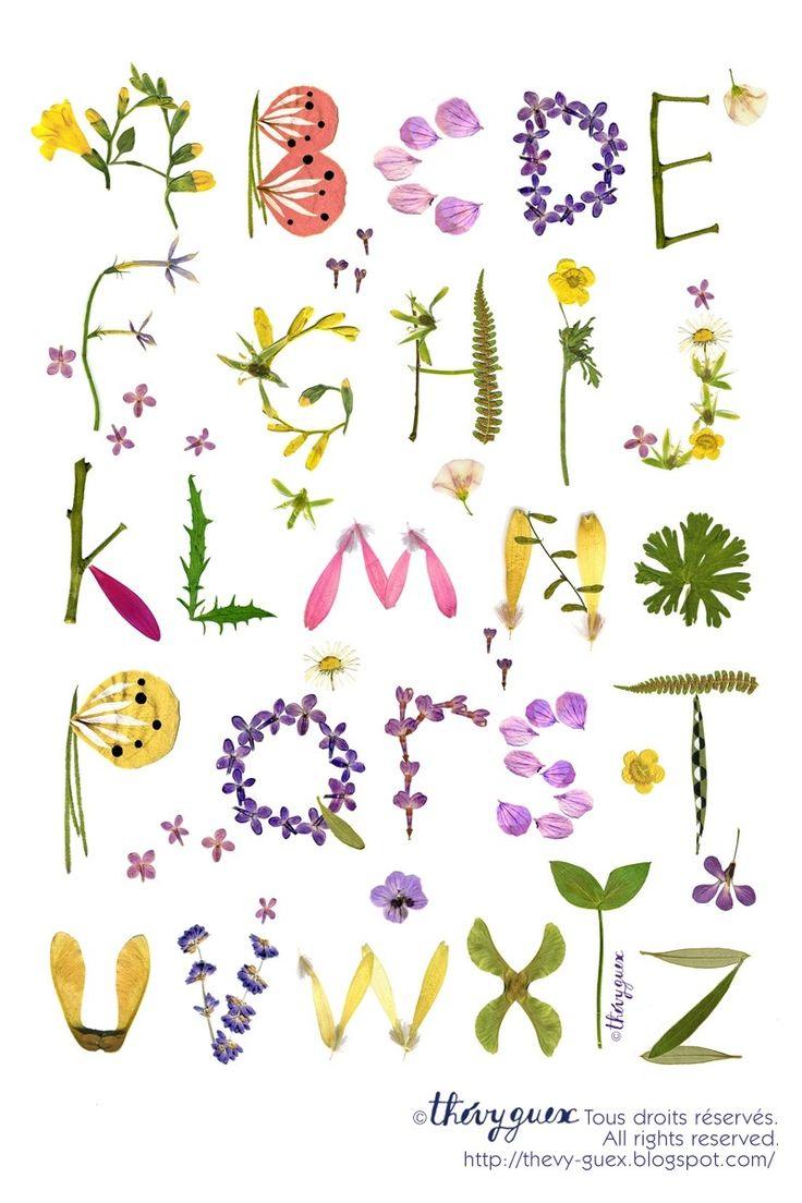 Poster Alphabet-Abécédaire Illustration Herbier Fleur Séchée : Affiches, illustrations, posters par thevy-guex