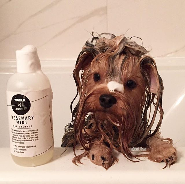 """It's BLACK FRIDAY at world of Angus. 55% off the entire store with code """"Blackfriday55"""" Lifestyle and grooming products for dogs"""
