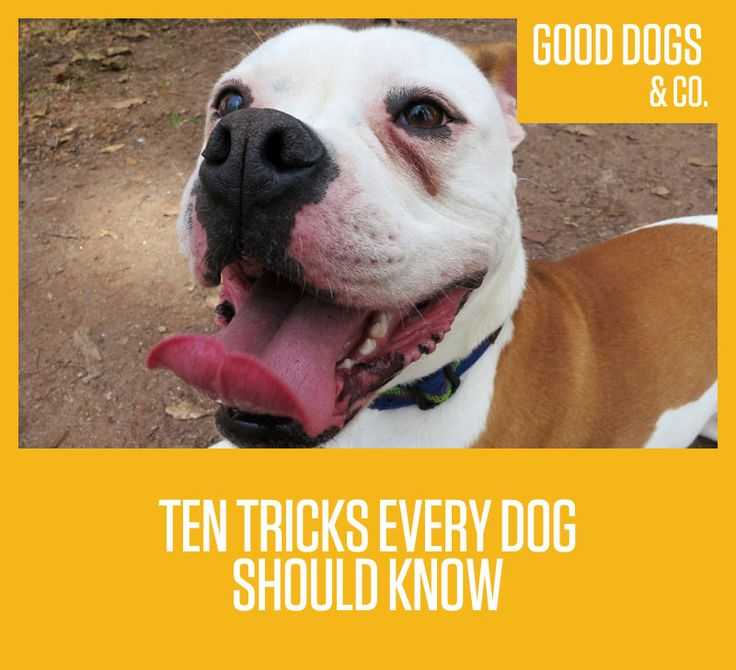 Ten tricks every dog should know!