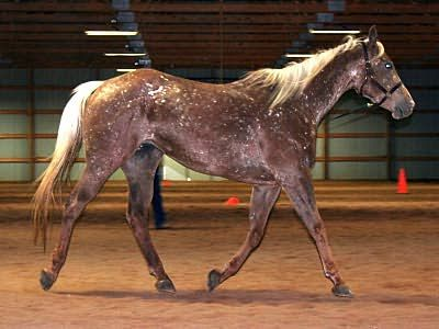Rare Horse Coats 17 Best images about S...