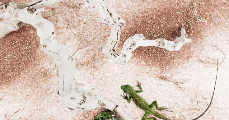 Ideas para proyectos con animales del desierto. Los desiertos son ambientes con climas muy secos y cálidos, donde llueve poco. Debido a esto, pocos animales viven allí. Estos animales se han adaptado a este tipo de ambiente duro y por eso son interesantes para estudiar. Puedes desarrollar diversos proyectos basados en estos animales para usar en tu salón de clases.