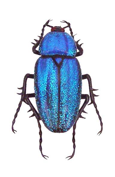 Emanuel Toffolo, glass bug