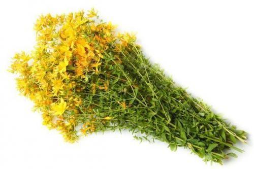 Зверобой - одно из самых известных в мире целебных растений.   Здоровое питание