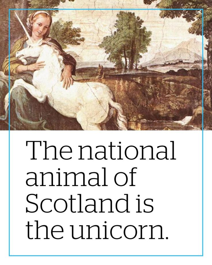 In Western parts of the world the unicorn was believed to be real for around 2500 years and was adopted as Scotlands national animal by King Robert in the late 1300s.