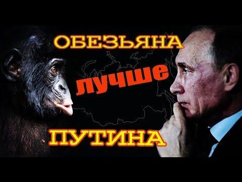 Обезьяна лучше Путина! Блог Олега Двуреченского