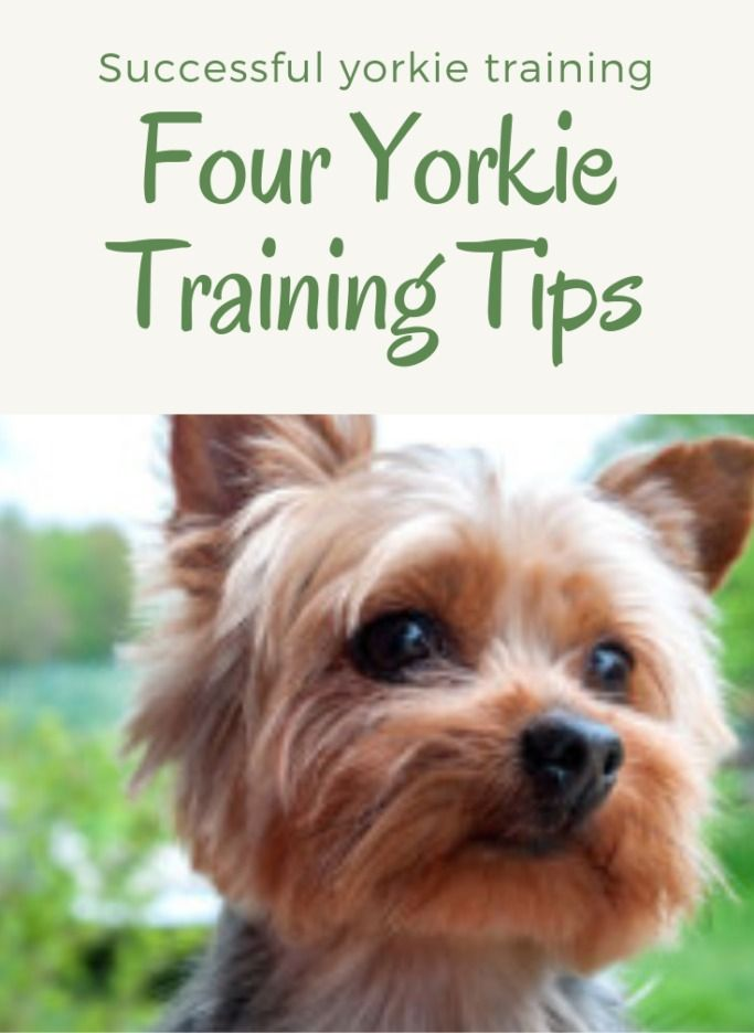 Doggy Dan S Online Dog Trainer Review Does The Course Really