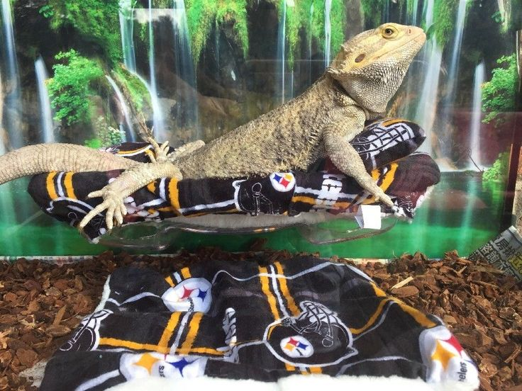 NFL STEELERS PRINT LRG ATTACHABLE RESTING BED SET SOFT COVERS 4 BEARDED DRAGONS  | eBay