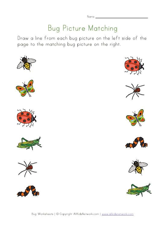 Printable Bugs Picture Matching